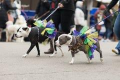 Beggin' zwierzęcia domowego parada Fotografia Royalty Free