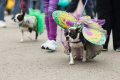 Beggin' zwierzęcia domowego parada Fotografia Stock