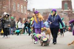 Beggin' zwierzęcia domowego parada Zdjęcia Royalty Free