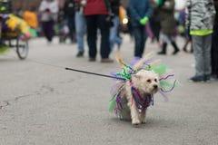 Beggin' zwierzęcia domowego parada Obrazy Royalty Free