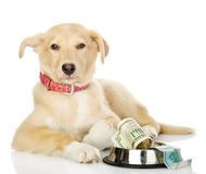Begging dog Stock Images