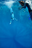 In the beggining of the dive. Freediver makes preparation dive near the safety line by breaststroke. Picture shows a part of freediving training session in Blue royalty free stock photo