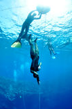 In the beggining of the dive. Freediver makes preparation dive near the safety line by breaststroke. Picture shows a part of freediving training session in Blue royalty free stock images