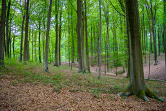 Begin autumn forest. The start of autumn in a local forest in belgium stock photography