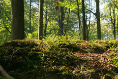 Begin autumn forest. The start of autumn in a local forest in belgium stock photos