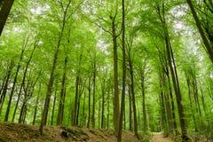 Begin de herfst met bos Stock Foto's