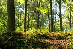 Begin de herfst met bos Royalty-vrije Stock Fotografie
