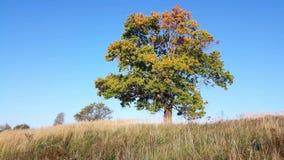 Begin van de herfst Gele bladeren op het groene gras
