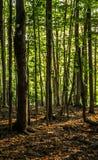Begin van de herfst Gele bladeren op het groene gras Stock Foto