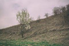 Begin van de lente - aardcyclus Royalty-vrije Stock Afbeelding