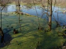 Begin van de lente in een moerassig landschap Stock Foto's