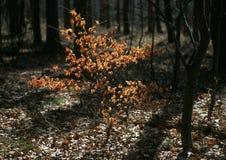Begin van de lente in het hout Stock Afbeelding