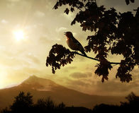 Begining of a new day. Singing bird on a branch against the morning sun royalty free stock photography
