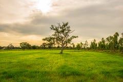 Beginnen Sie die Vegetationsperiode 5 Lizenzfreies Stockfoto