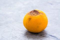Beginner aan verrotting bedorven mandarin stock foto's