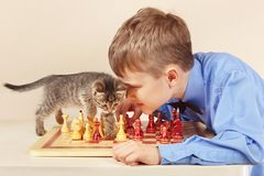 Beginner grandmaster met de spelenschaak van het gestreepte katkatje stock foto