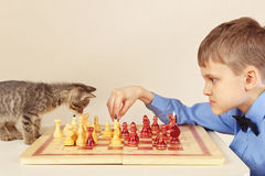Beginner grandmaster with playful kitten plays chess. Royalty Free Stock Image