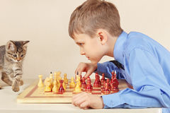 Beginner grandmaster with pretty kitten plays chess. Royalty Free Stock Images