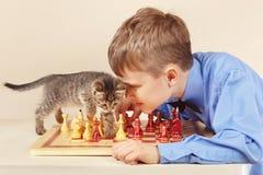Beginner grandmaster with tabby kitten plays chess. Stock Photo