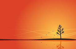 Beginning of Autumn. Lone tree shedding its first leafs at the beginning of autumn season Stock Image