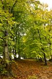 Beginning of autumn Royalty Free Stock Photography
