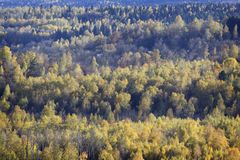 The beginning of autumn - colored trees Stock Photography
