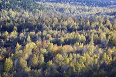 The beginning of autumn - colored trees Royalty Free Stock Image