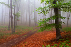 Beginning of autumn in a foggy forest Royalty Free Stock Photo