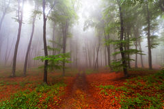 Beginning of autumn in a foggy forest Stock Photography
