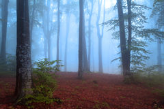 Beginning of autumn in a foggy forest Royalty Free Stock Photography