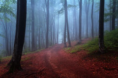 Beginning of autumn in a foggy forest Royalty Free Stock Photos