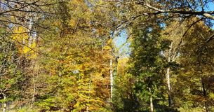 Autumn foliage with trees in a park Royalty Free Stock Photos