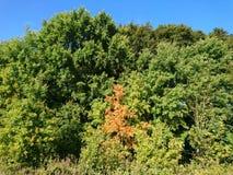 Beginning of autumn Stock Photos