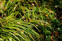 Autumn in the forest. Leaves and grass, daytime. The beginning of aytumn in the forest. Yellow leaves and some grass. Daytime royalty free stock photos
