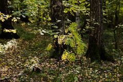 Autumn in the forest. Leaves and trees, daytime. The beginning of aytumn in the forest. Yellow leaves and some grass. Daytime royalty free stock photo