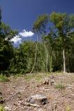 Beginning of deforestation Stock Images