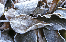 The beginning of frost in nature Royalty Free Stock Photos