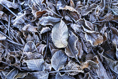 The beginning of frost in nature Royalty Free Stock Photography
