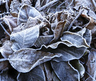 The beginning of frost in nature Royalty Free Stock Photo