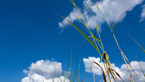Beginning grass. The sky is bright Royalty Free Stock Photos