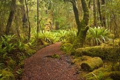 Beginning of Kepler track in fern forest in New Zealand. One of the Great Walks according Lonely Planet guide book, green fern everywhere as national plant of stock photography