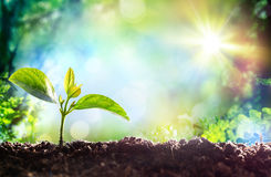 Beginning Of A New Life- Growing Sprout Royalty Free Stock Image