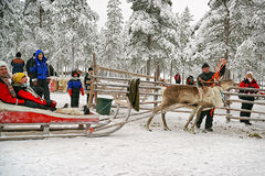 Beginning of the race on the reindeer sledges Stock Photography