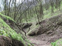 Beginning of a ravine. Ravine with trees and young grass in spring Royalty Free Stock Photos