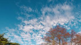 The beginning of spring. the clouds are floating against the blue sky stock footage