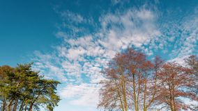 The beginning of spring. the clouds are floating against the blue sky stock video footage