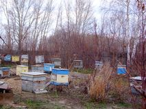 The beginning of spring at the old apiary. stock images