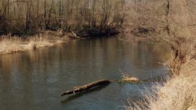 The beginning of spring. wild fast river among the thickets stock footage