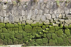 Beginning of stairs. Background image of some stone stairs covered with green mud half the way stock photo