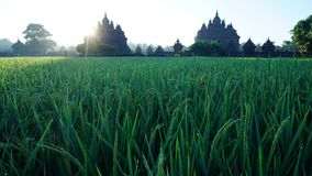 The sun rises early summer with the foreground of a temple royalty free stock photography